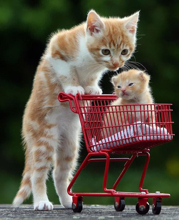 animals-with-miniature-versions-of-themselves-44