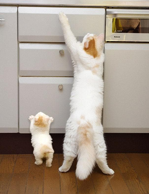 animals-with-miniature-versions-of-themselves-6