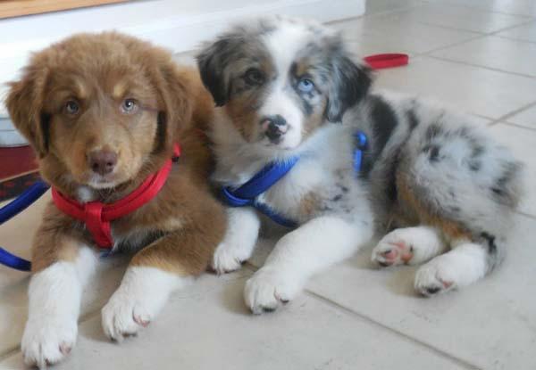 blind-puppy