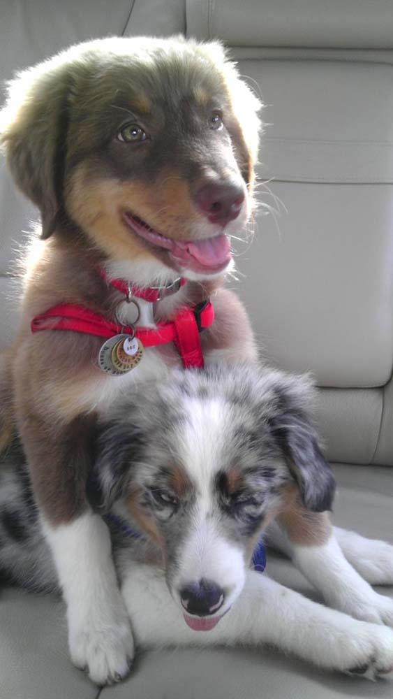 blind-puppy2