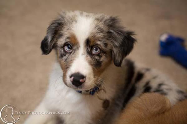 blind-puppy3
