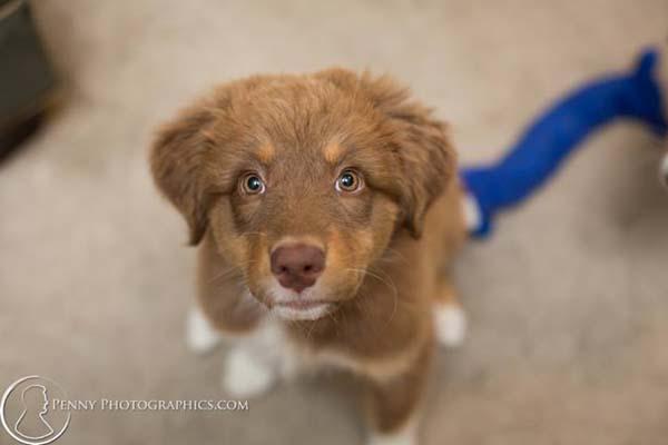 blind-puppy4