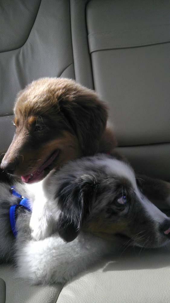 blind-puppy5