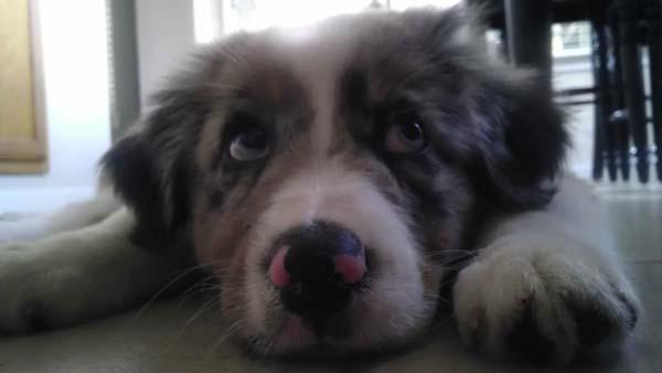blind-puppy9