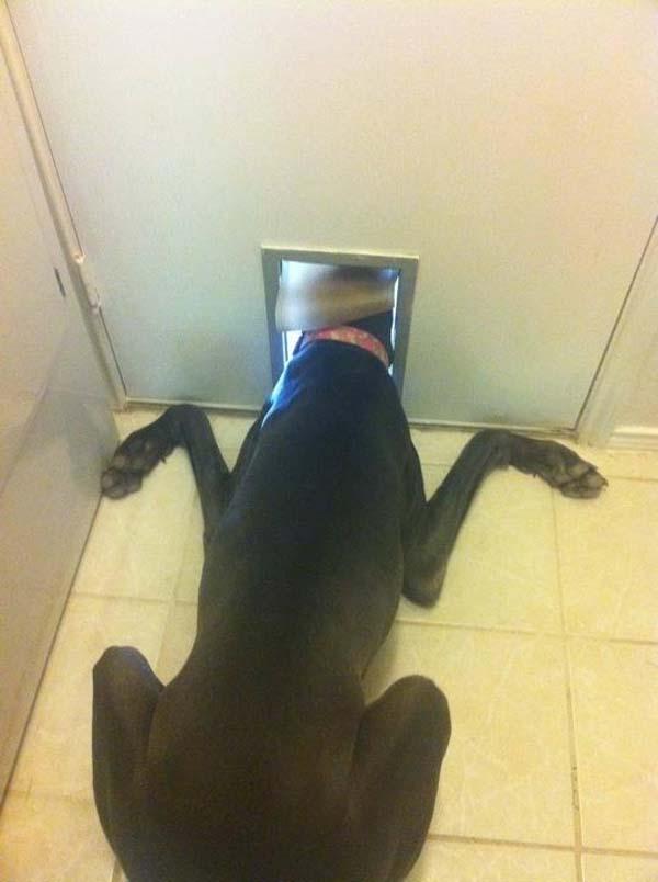 dog-forgot10