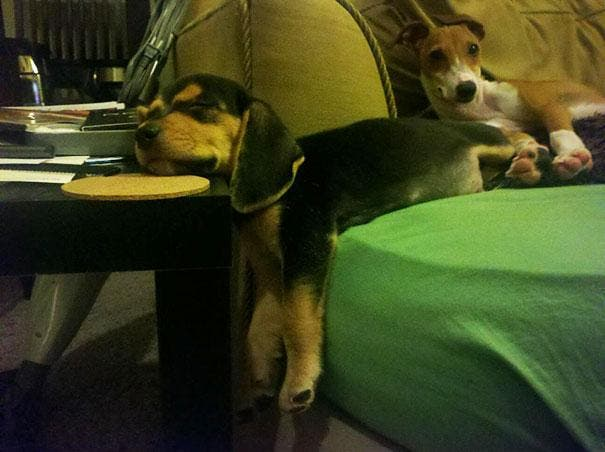 funny-cats-dogs-stuck-furniture-14