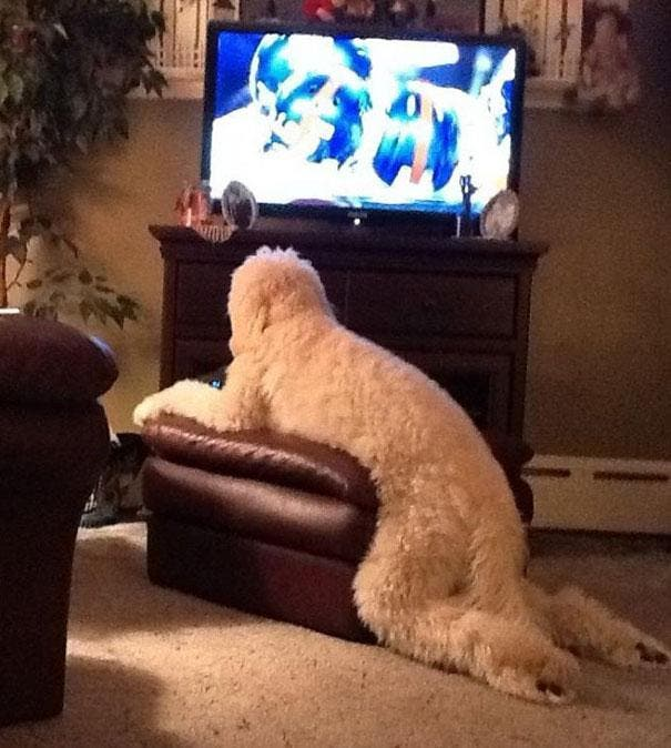 funny-cats-dogs-stuck-furniture-21