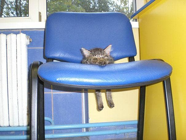 funny-cats-dogs-stuck-furniture-3