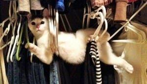 gato-posicion-rara-perchas