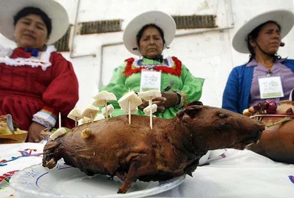 guinea-pigs12