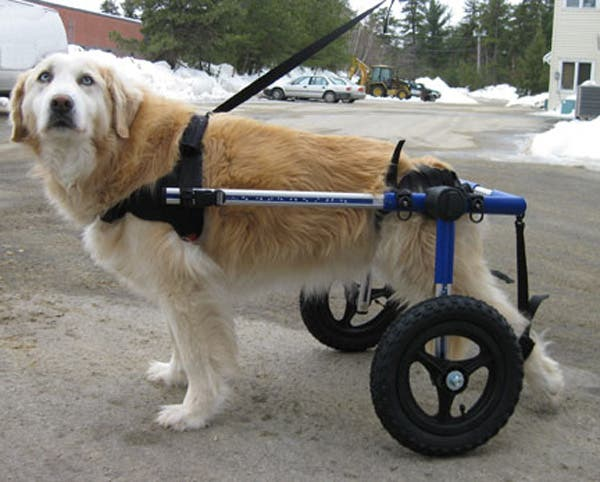handicapped-dog_1