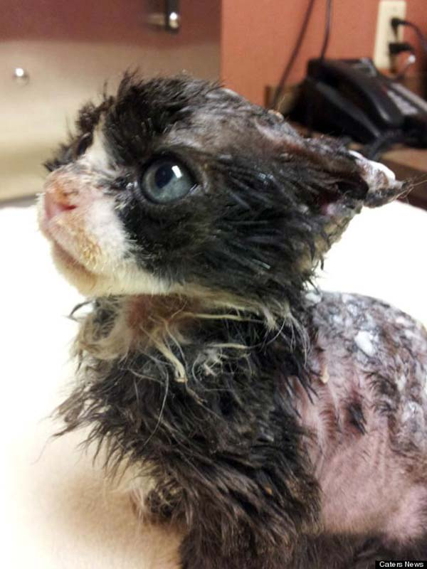 Burned Kitten Finds A New Family
