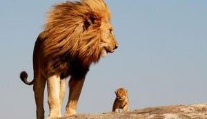 leona-madre-con-cachorro