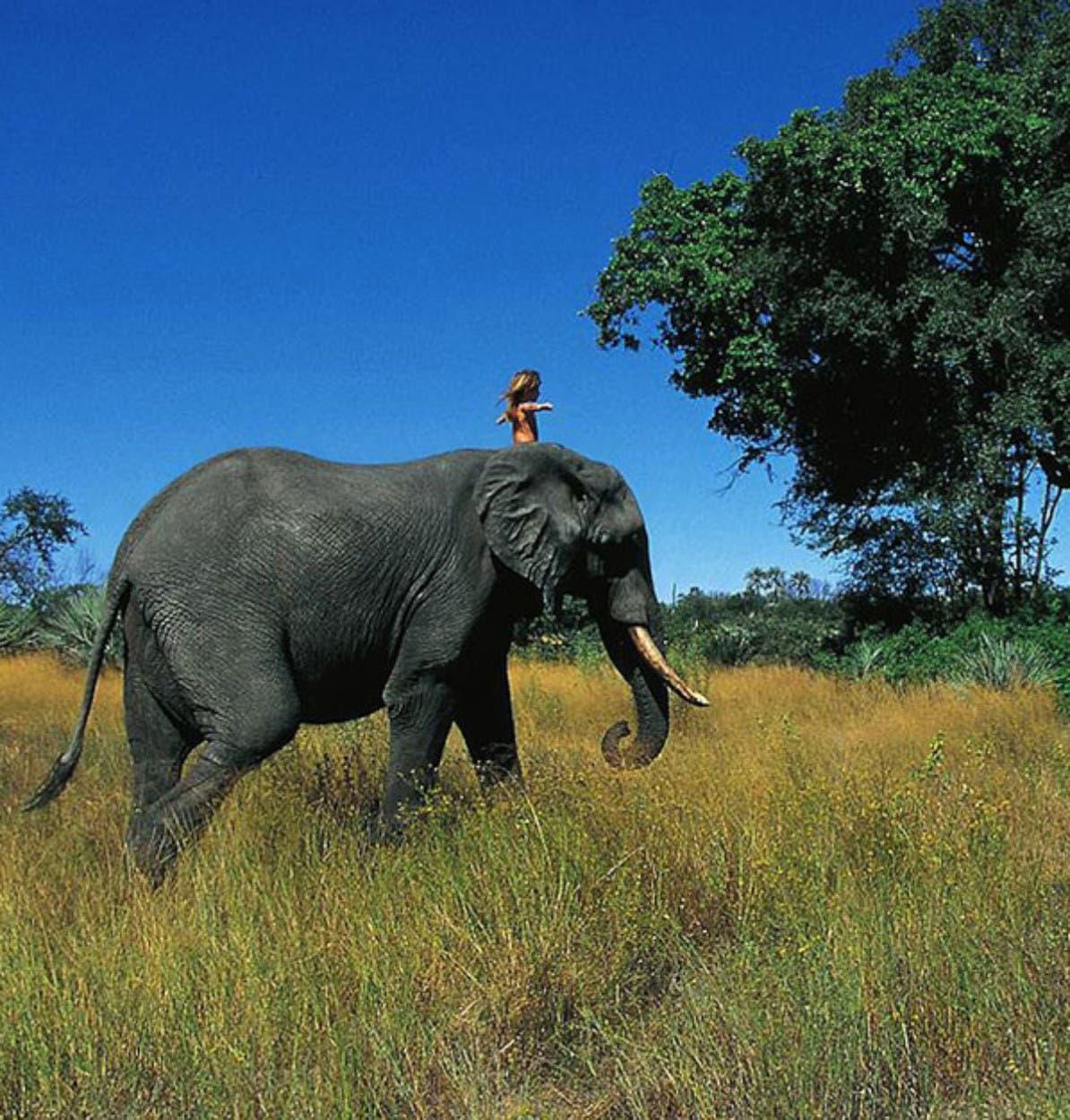 little-girl-rides-elephant-tippi-of-africa