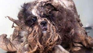 perro-callejero-cubierto-de-porqueria