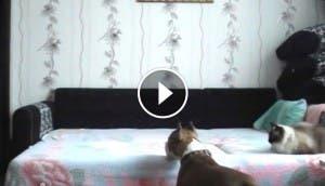 perro-sube-cama-dueno-play