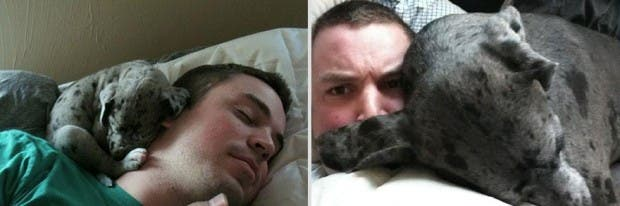 pets-before-after-11