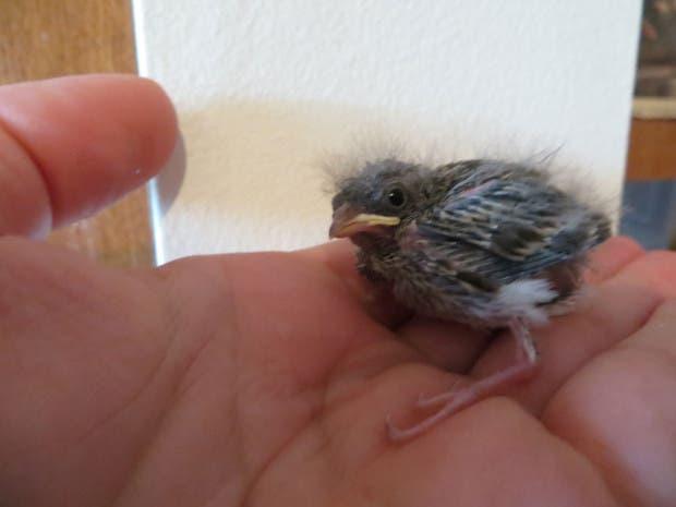 rescued_songbird_07