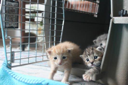 sweet-kittens