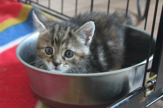 sweet-kittens10