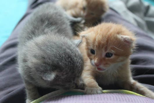 sweet-kittens2