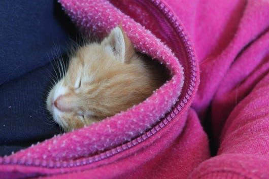 sweet-kittens6