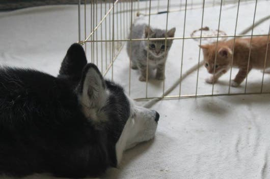sweet-kittens8
