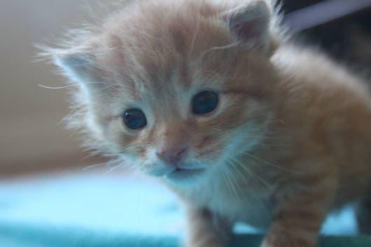 sweet-kittens9