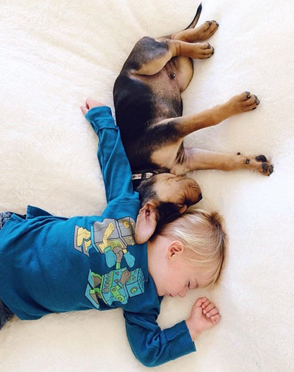 toddler-naps-with-puppy-theo-and-beau-2-6