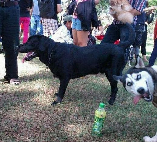 animal-photobombs (4)