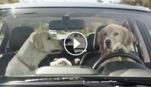 anuncio-perros-subaru-play
