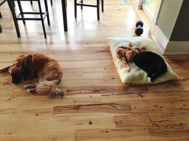 dog-beds12