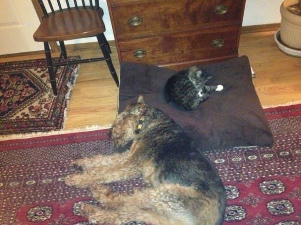 dog-beds14