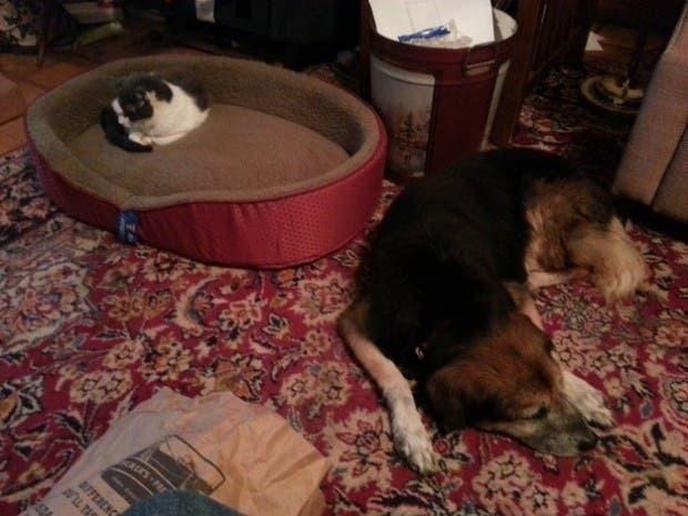 dog-beds16