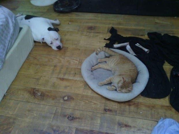 dog-beds18