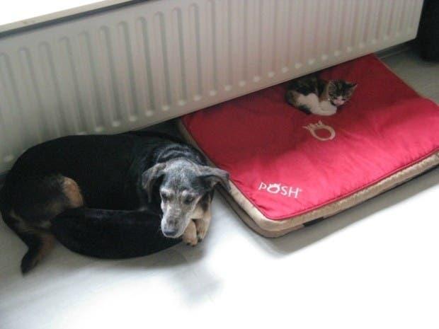 dog-beds20