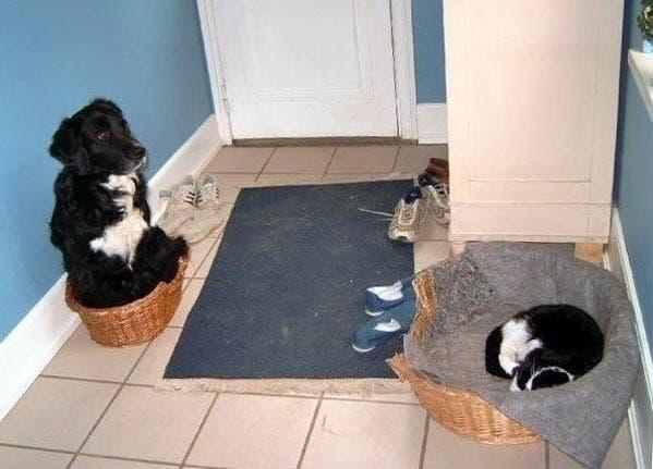 dog-beds23
