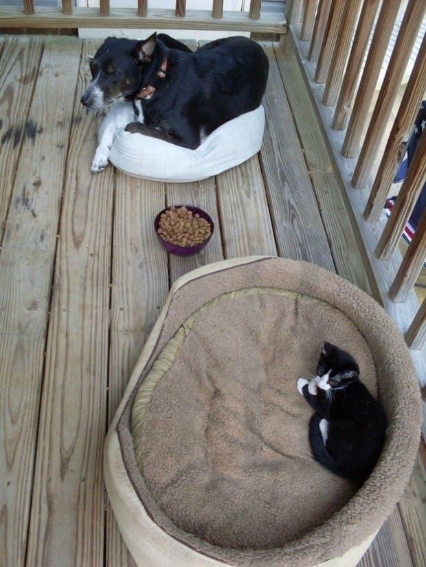 dog-beds25