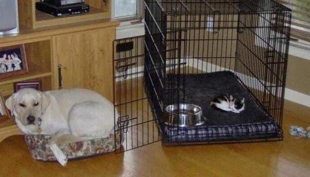 dog-beds28