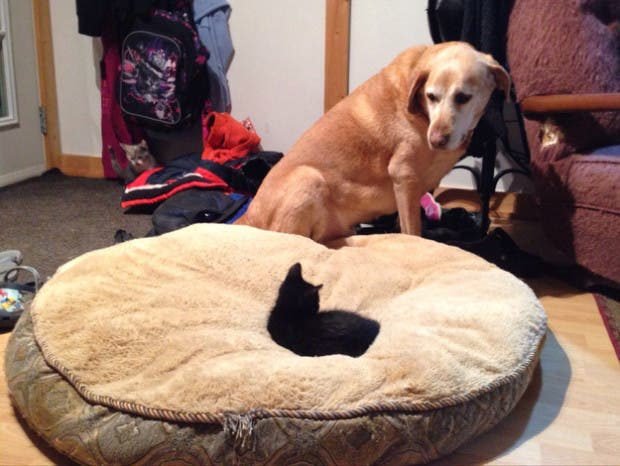 dog-beds3