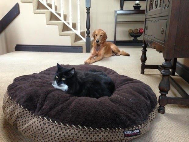 dog-beds4