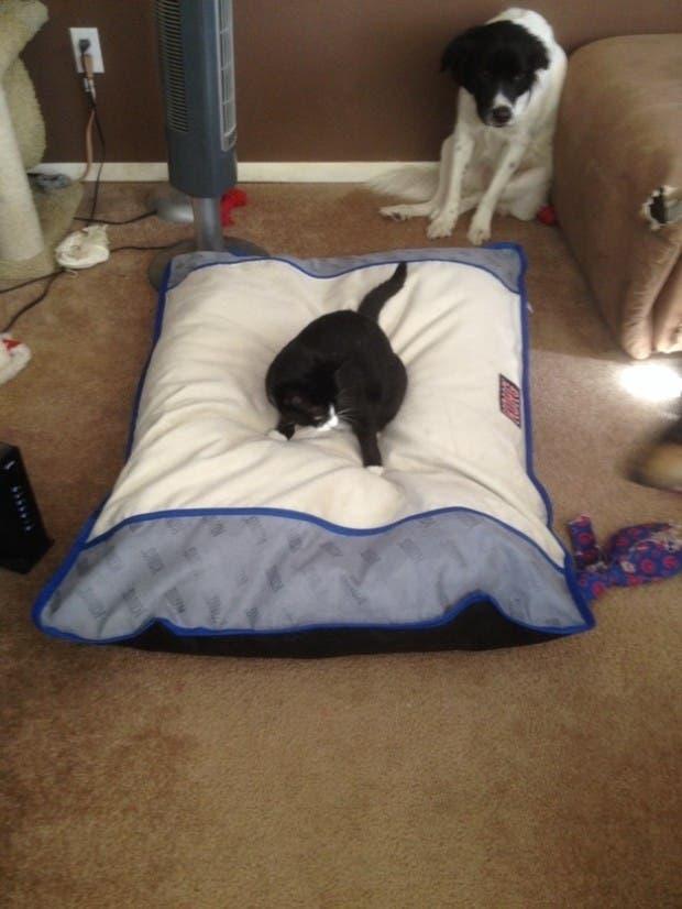 dog-beds5