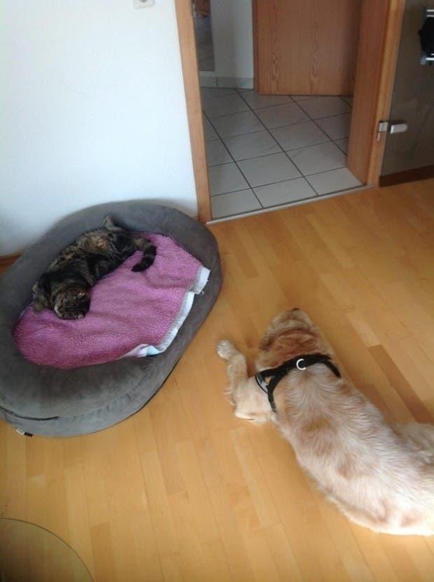 dog-beds7