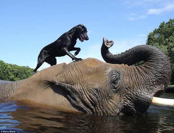 dog-elephant