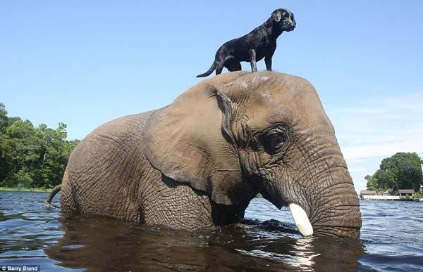 dog-elephant2