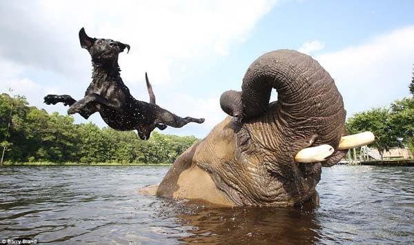 dog-elephant4