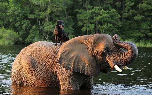 dog-elephant9