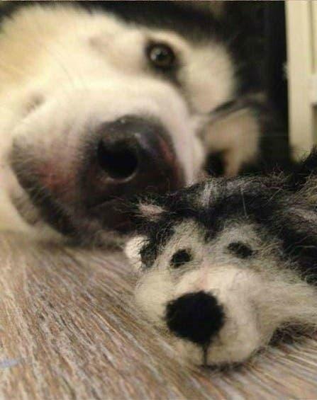 dog-meta (1)
