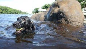 elefante-perro-amigos