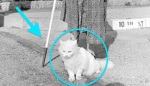 gato-hace-mucho-por-mujer